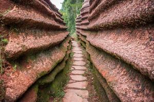foresta di pietra rossa