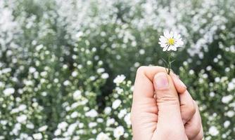 una mano sta portando un fiore da taglio foto