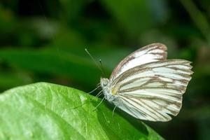la farfalla. divieto di campeggio Krang