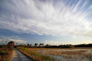 sentiero delle zone umide foto