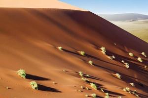 arbusti di dune di sossusvlei foto