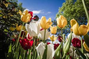 bellissimi tulipani colorati in un giardino verde di Istanbul
