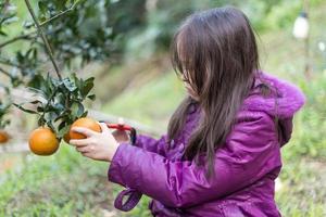 bambino in fattoria di arance foto