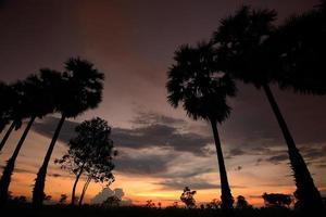 tramonto della siluetta foto