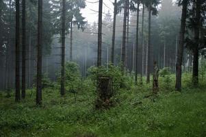 mattina nella foresta foto