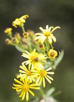 fiori di campo autunnali foto