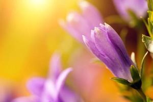 fiore nel tramonto foto