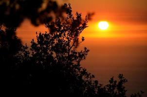 tramonto attraverso i rami foto