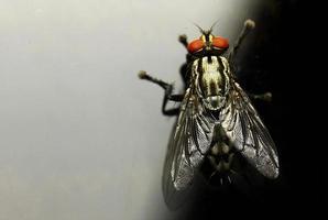 vista dall'alto della mosca