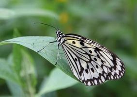 farfalla di aquilone di carta foto