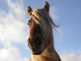pony highland isola di rum foto