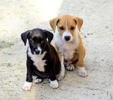cuccioli carini foto