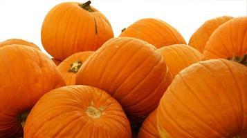 mucchio pumpking 2 bianco bg