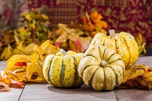 zucca di autunno con foglie d'autunno
