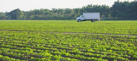 camion in campo, in florida foto