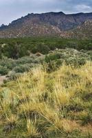 paesaggio di montagna prato nel deserto foto