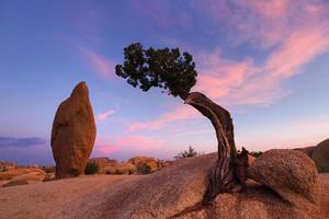 albero di ginepro e roccia in equilibrio foto