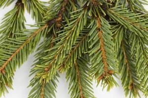 albero di Natale. foto