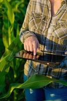 agronomo con computer tablet nel campo di grano foto