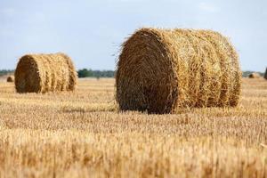 raccolto campo di grano collinare con balle di paglia