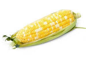 una spiga di grano isolata su uno sfondo bianco