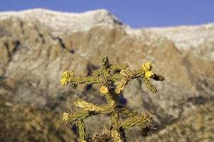 paesaggio di cactus sud-ovest invernale foto