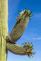 splendidi cactus nel paesaggio