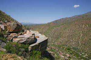 cactus gigante del saguaro, parco nazionale del saguaro foto