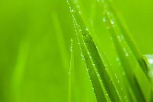 erba verde. foto