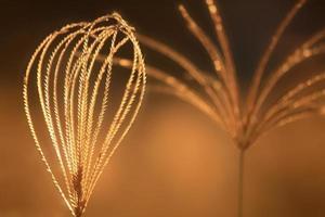 erbe al tramonto foto