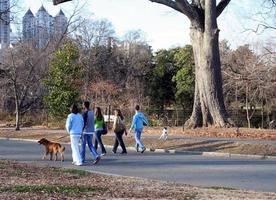 cane che cammina foto