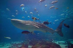 paese delle meraviglie sottomarino foto