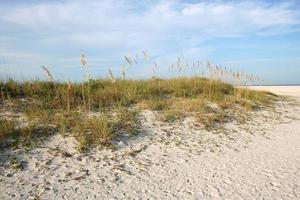 duna sulla spiaggia