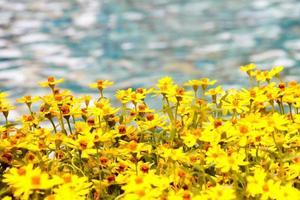 bel fiore giallo accanto al fiume con acqua di fiume sfocata