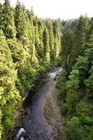 fiume attraverso la foresta foto