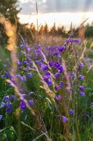 fiori estivi foto