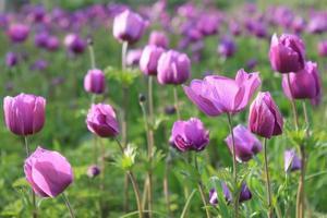 primavera foto