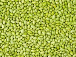 semi di soia verdi foto