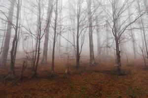 misterioso paesaggio della foresta nebbiosa foto