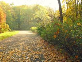 caduta delle foglie