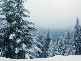 paese delle meraviglie invernale foto