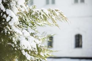 foresta invernale foto