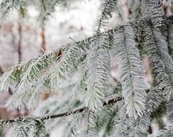 umore invernale