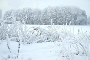 foresta fredda d'inverno foto