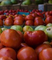 filari di pomodori al mercato del contadino