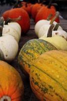 zucche di fila. 3 diverse varietà foto