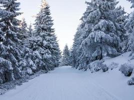 inverno in montagna foto