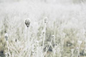 campo invernale foto