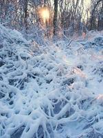 Allerton Park paesaggio invernale foto