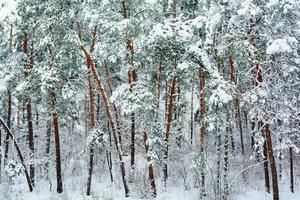 foresta invernale sullo sfondo foto